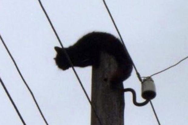 Кот на фонарном столбе