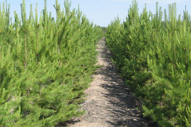 Восстановление лесов