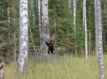 Медведь-1