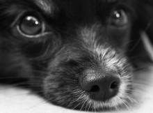 10-12-собака