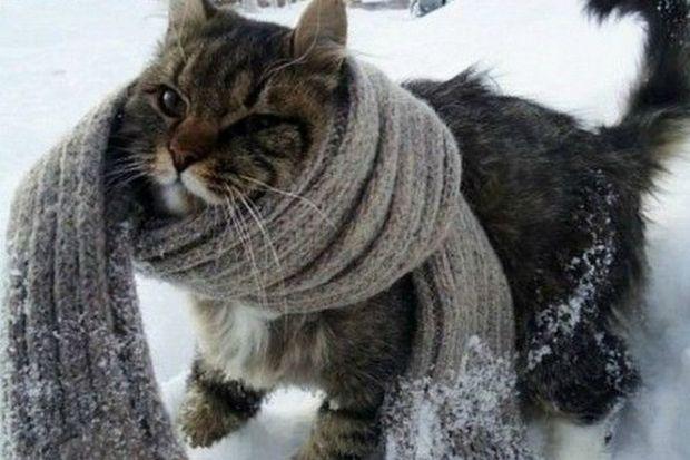 Холод_мороз_кот