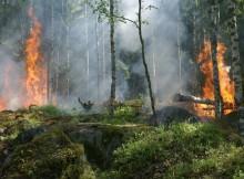 11-02-лес-пожар