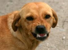 11-02-собака