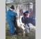 25-02-корова