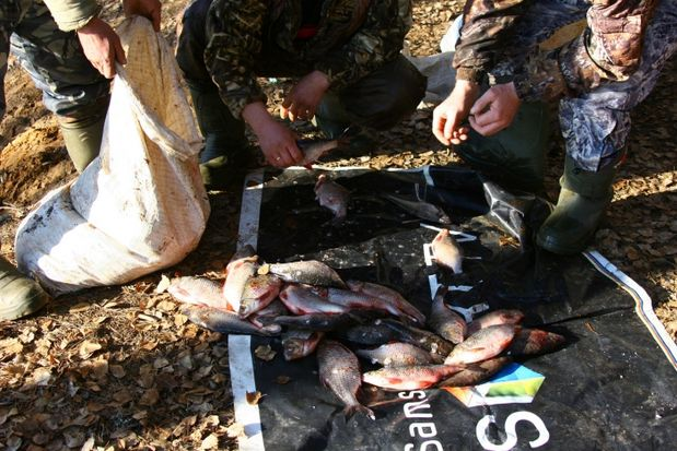 14-04-рыба-браконьеры