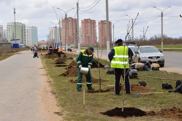 19-04-деревья