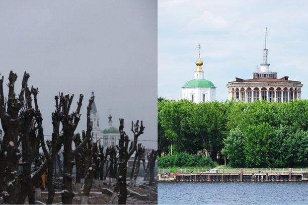 остановите вырубку деревьев