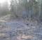 03-05-лес-пожар