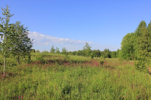 08-05-лес