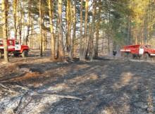 31-05-лес-пожар