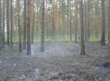 Лесной_пожар