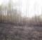 пожар_лес_Калининский район