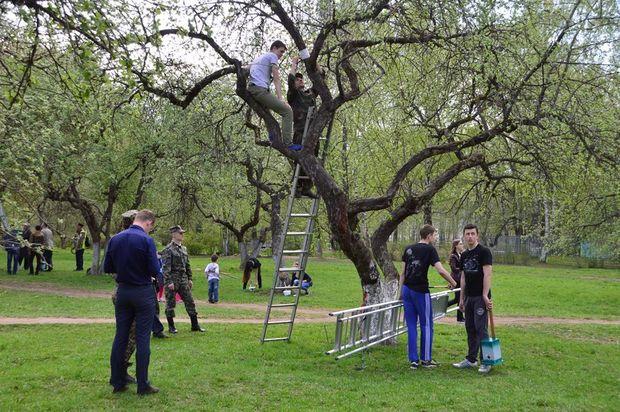 яблоневый сад_работа