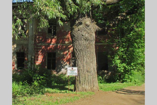 09-06-царский дуб