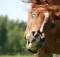 05-07-лошадь