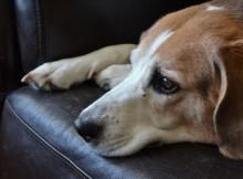 14-07-собака