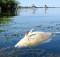 дохлая рыба_загрязнение рек