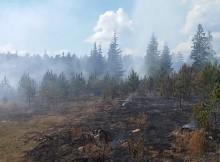 лес-пожар111
