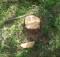 вырубка леса_черный лесоруб