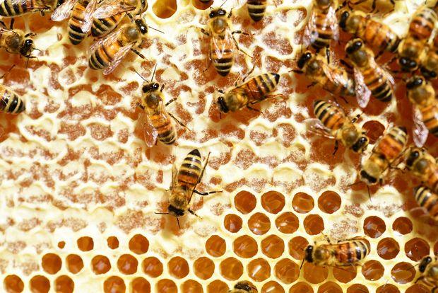 14-08-пчелы
