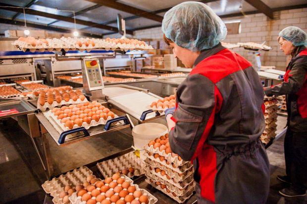птицефабрика_яйца