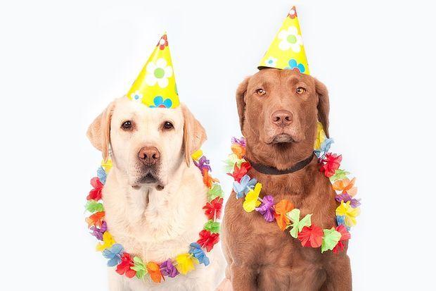 собаки-праздник