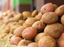 15-09-картофель