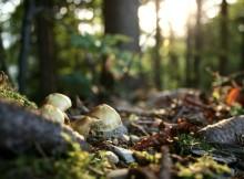 15-09-лес-грибы