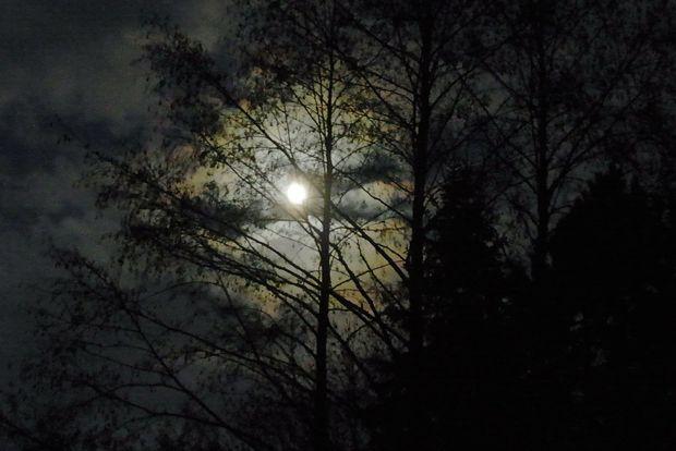 23-10-лес-ночь