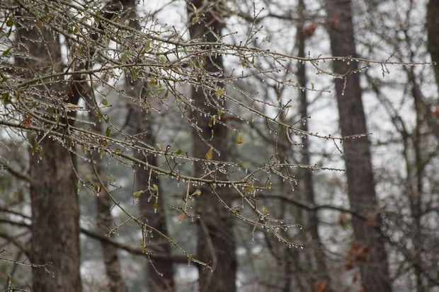 24-11-ледяной дождь