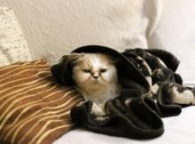 15-12-тепло-кот