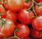 08-02-помидор