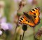 01-03-бабочка