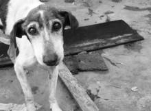 01-03-собака
