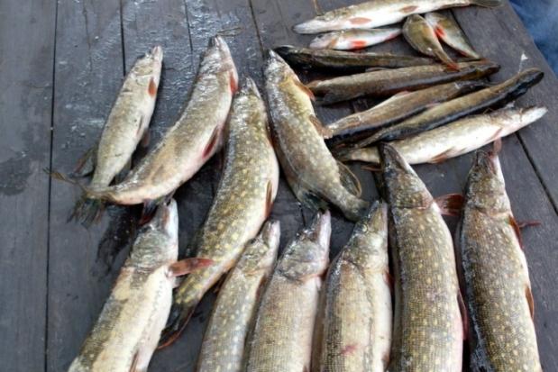 06-04-рыба