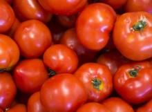 10-04-помидоры