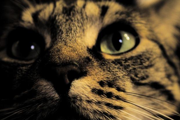 24-04-кошка