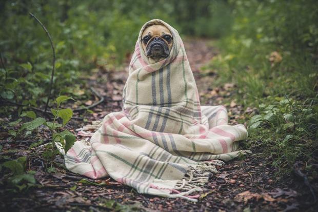 10-05-собака-одеяло