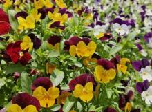 11-05-цветы