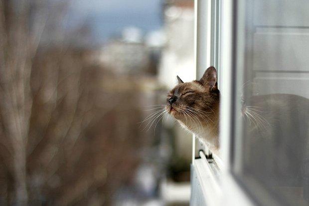 открытое окно_весна