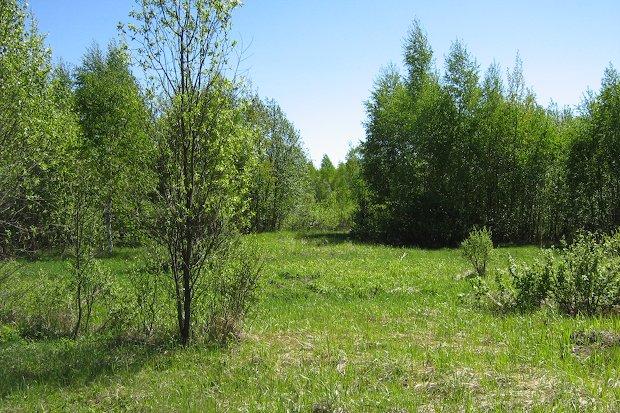 заросший земельный участок
