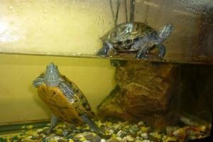 05-007-черепаха