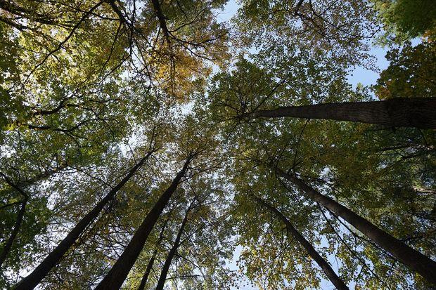 27-07-лес