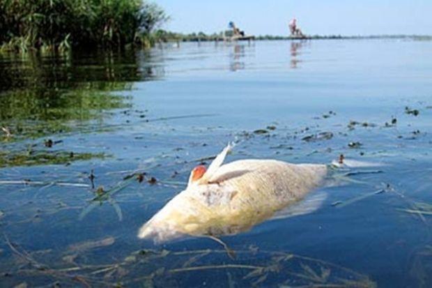 14-08-рыба