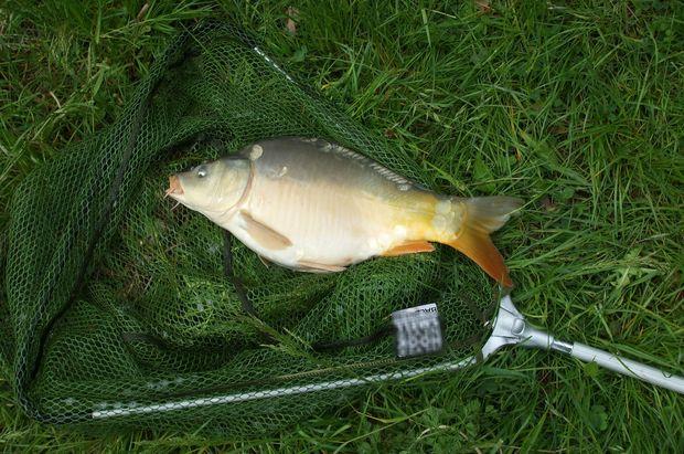 20-08-рыбалка-карп