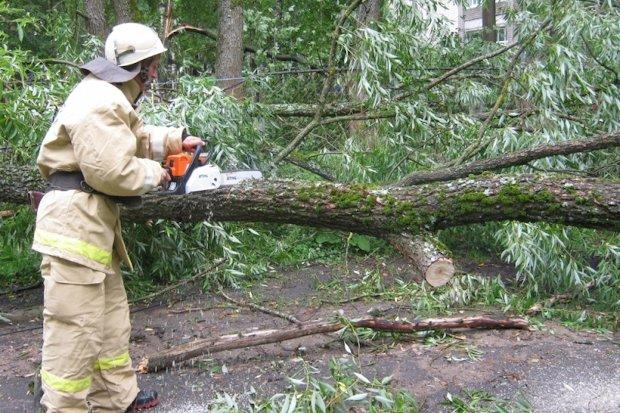 упавше дерево