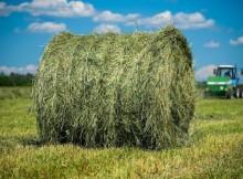 заготовка кормов-сено