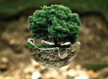 11-10-дерево