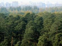лес_тверь_зеленый щит_зеленый пояс