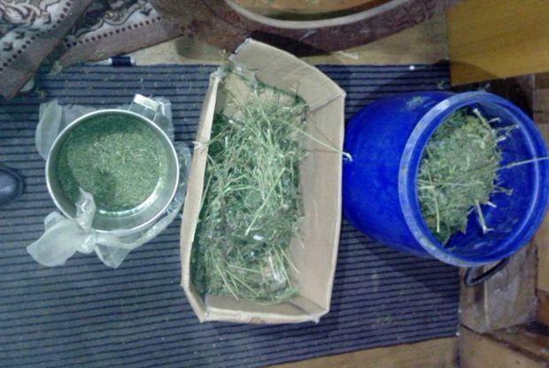 25-11-марихуана